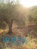 Land for sale in AVIA MESSHNIAS
